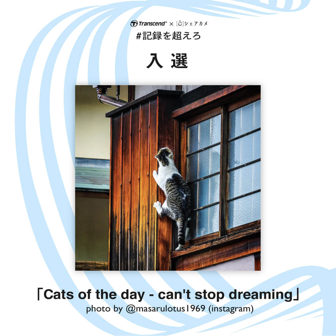 入選 「Cats of the day - can't stop dreaming」